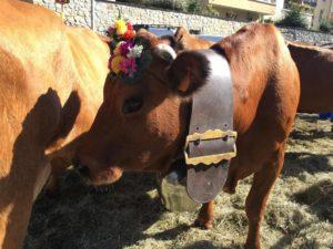 Merci aux vaches pour votre bon lait !