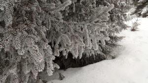 Branches et épines gelées