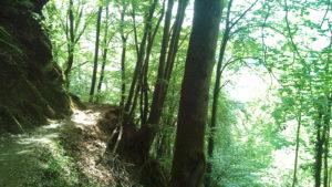 Une randonnée agréable, en grande partie à l'ombre