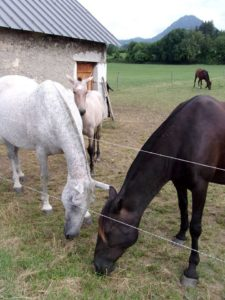 De beaux chevaux